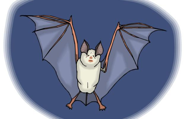 Летучая мышь анимашка